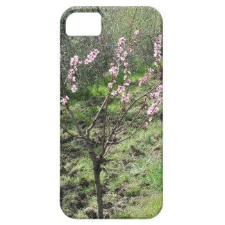 Single peach tree in blossom. Tuscany, Italy iPhone 5 Cases