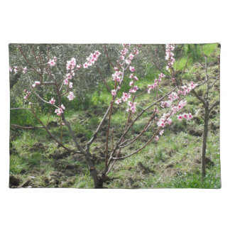 Single peach tree in blossom. Tuscany, Italy Placemat