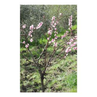 Single peach tree in blossom. Tuscany, Italy Stationery