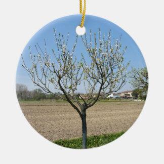 Single pear tree in blossom in Tuscany, Italy Round Ceramic Ornament