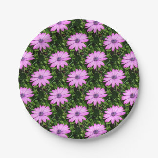 Single Pink African Daisy Against Green Foliage 7 Inch Paper Plate