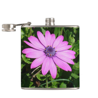 Single Pink African Daisy Against Green Foliage Hip Flask