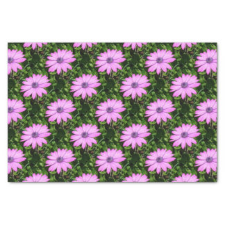 Single Pink African Daisy Against Green Foliage Tissue Paper