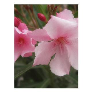 Single Pink Oleander 9 Postcard