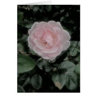 Single Pink Rose Anniversary Card