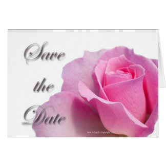 Single Pink Rose Save the Date Greeting Cards