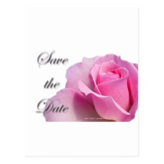 Single Pink Rose Save the Date Post Cards