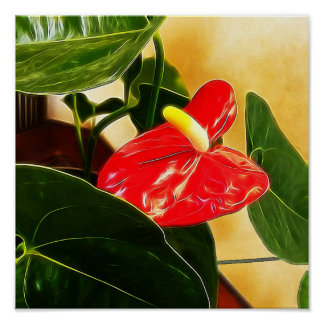 Single Red Anthurium Flower Poster