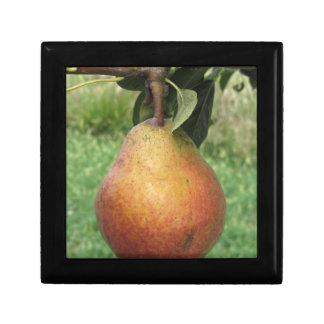 Single red pear hanging on the tree gift box
