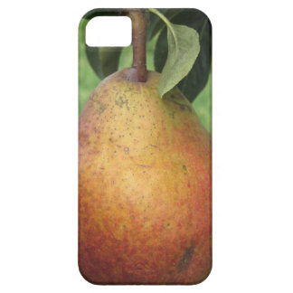 Single red pear hanging on the tree iPhone 5 case