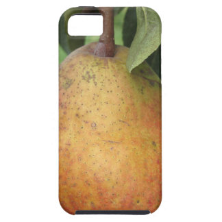 Single red pear hanging on the tree iPhone 5 covers