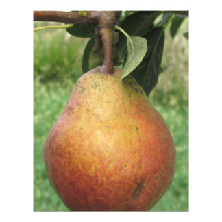 Single red pear hanging on the tree letterhead