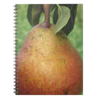 Single red pear hanging on the tree notebooks
