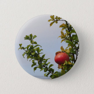 Single red pomegranate fruit on the tree in leaves 2 inch round button