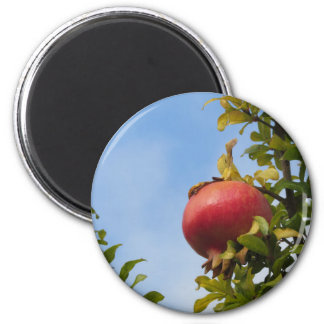Single red pomegranate fruit on the tree in leaves 2 inch round magnet