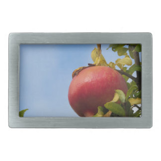 Single red pomegranate fruit on the tree in leaves belt buckle