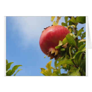 Single red pomegranate fruit on the tree in leaves card