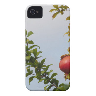 Single red pomegranate fruit on the tree in leaves Case-Mate iPhone 4 cases