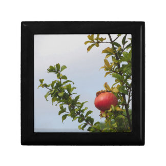 Single red pomegranate fruit on the tree in leaves gift box