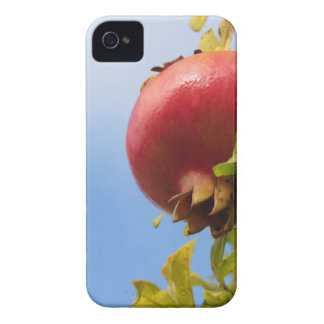 Single red pomegranate fruit on the tree in leaves iPhone 4 cases