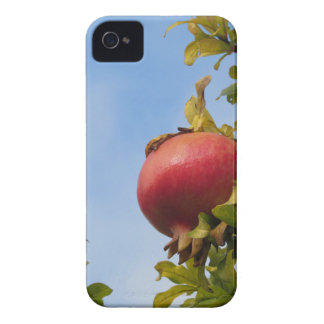 Single red pomegranate fruit on the tree in leaves iPhone 4 cover