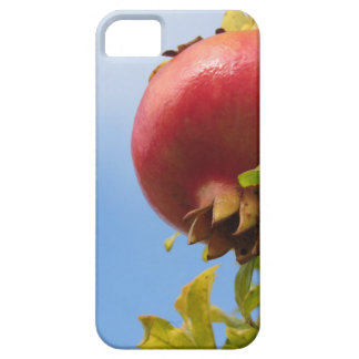 Single red pomegranate fruit on the tree in leaves iPhone 5 case