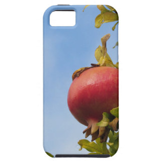 Single red pomegranate fruit on the tree in leaves iPhone 5 cases