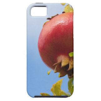 Single red pomegranate fruit on the tree in leaves iPhone 5 covers