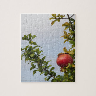 Single red pomegranate fruit on the tree in leaves jigsaw puzzle