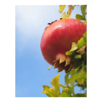 Single red pomegranate fruit on the tree in leaves letterhead