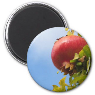 Single red pomegranate fruit on the tree in leaves magnet