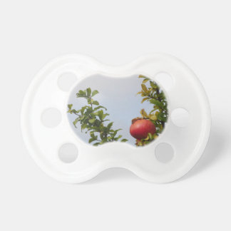 Single red pomegranate fruit on the tree in leaves pacifier