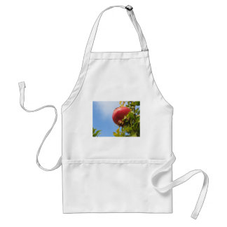 Single red pomegranate fruit on the tree in leaves standard apron