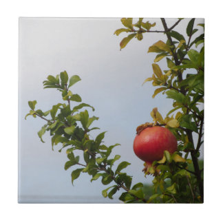 Single red pomegranate fruit on the tree in leaves tile