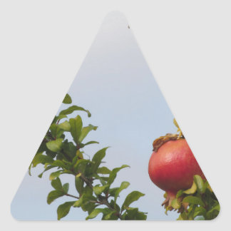 Single red pomegranate fruit on the tree in leaves triangle sticker