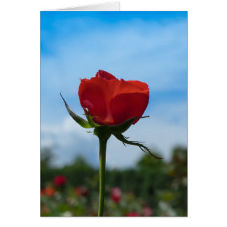 Single Red Rose and Blue Sky Card