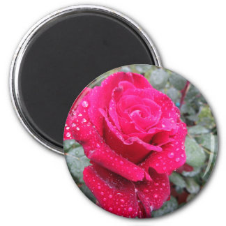 Single red rose flower with water droplets 2 inch round magnet
