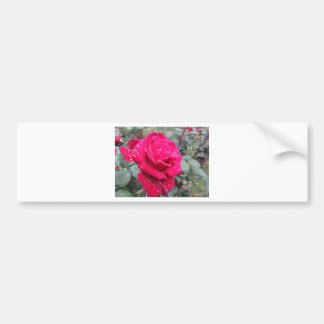 Single red rose flower with water droplets bumper sticker