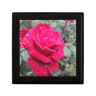 Single red rose flower with water droplets gift box