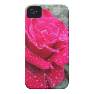 Single red rose flower with water droplets iPhone 4 Case-Mate case
