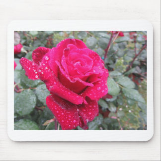 Single red rose flower with water droplets mouse pad