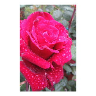 Single red rose flower with water droplets stationery