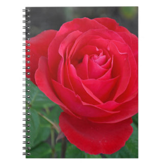 Single red rose note books