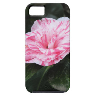Single red streaked white flower Camellia japonica Case For The iPhone 5