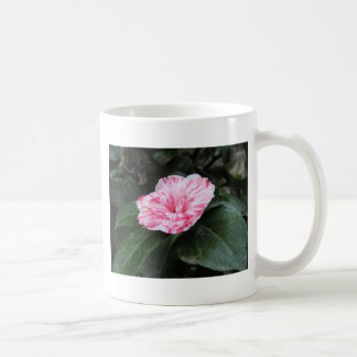 Single red streaked white flower Camellia japonica Coffee Mug