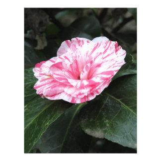 Single red streaked white flower Camellia japonica Letterhead
