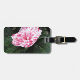 Single red streaked white flower Camellia japonica Luggage Tag