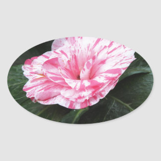Single red streaked white flower Camellia japonica Oval Sticker
