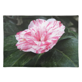 Single red streaked white flower Camellia japonica Placemat