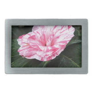 Single red streaked white flower Camellia japonica Rectangular Belt Buckle